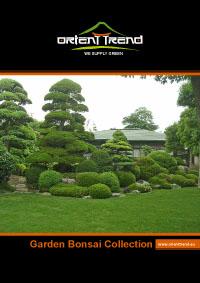 Orient Trend kerti Bonsai katalógus
