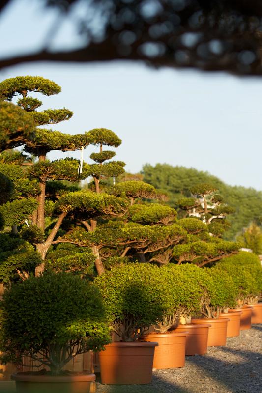 Orient Trend galéria, fotó 2